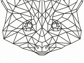Геометрический енот