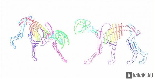 Саблезубый скелет тигра 2